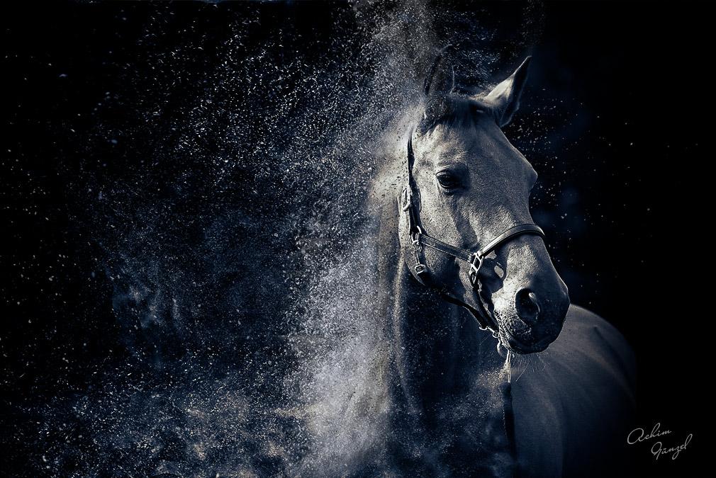 Pferd im Sandsturm